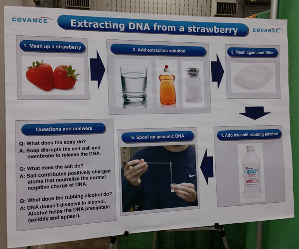 How to take the DNA out of a strawberry at Celebrate Science Indiana | Detective or Home Scientist Badge Idea