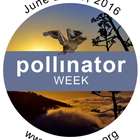 Celebrating National Pollinator Week with your scouts