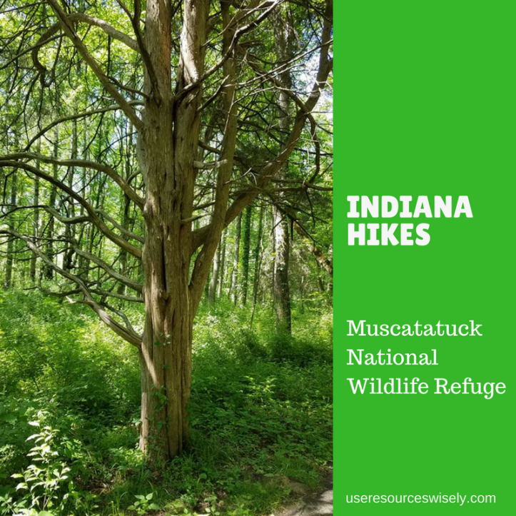 There are paved and natural hiking trails at Muscatatuck National Wildlife Refuge in south central Indiana.