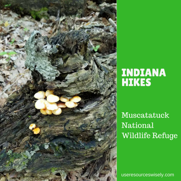 Muscatatuck National Wildlife Refuge in Indiana: Great hiking trails and bird watching opportunities