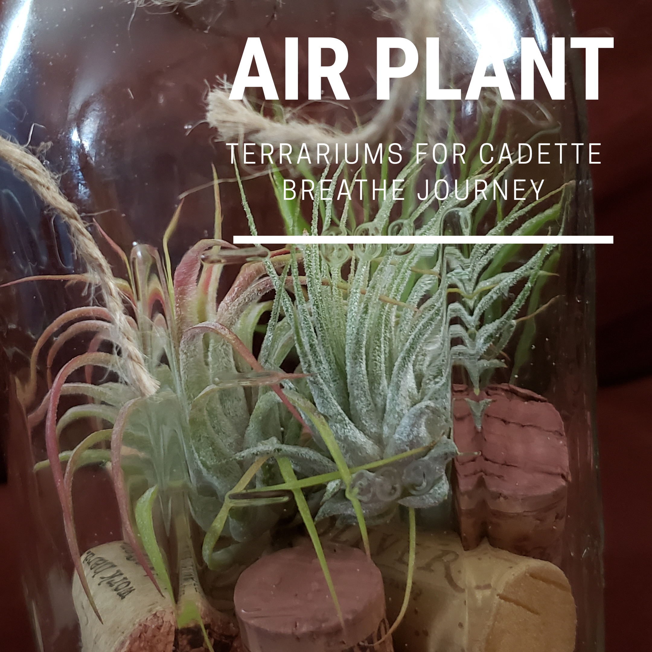 How To Make Cork Air Plant Terrariums For Cadette Breathe Journey Use Resources Wisely